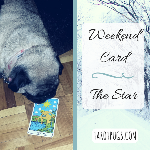 Tarot Pugs TarotPugs Star Weekend